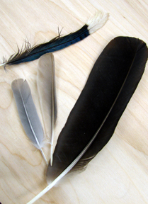 Some New Feather Finds