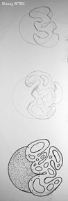 My design process trying to get the squiggles just right.