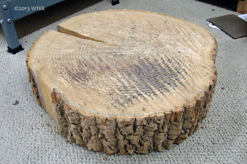 My unglamorous but very used stump.