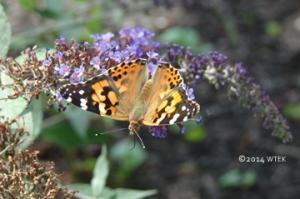 Cool motherfly ©2014 WTEK