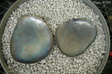 """The nickel parts for the """"U"""" wall piece ©2014 WTEK"""