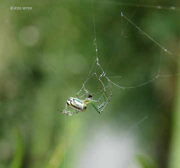 The Widow of the Web ©2015 WTEK